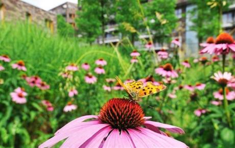 w96_497668-vlinder-2-medium